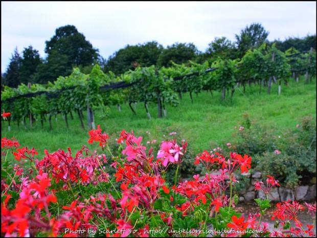 winetasting01