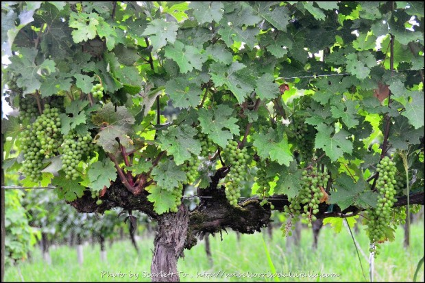 winetasting08