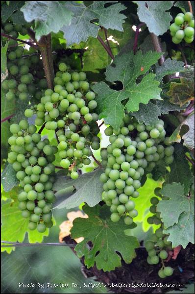 winetasting09